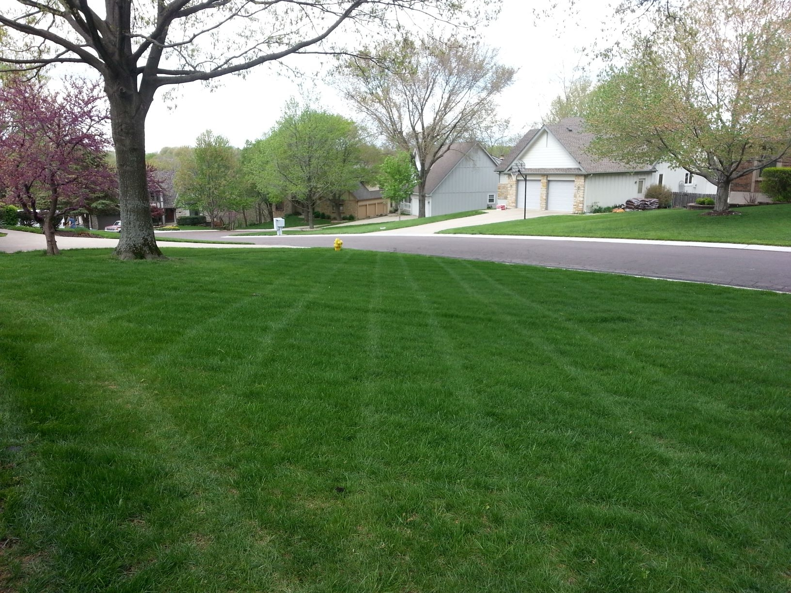landscape company in Raytown MO